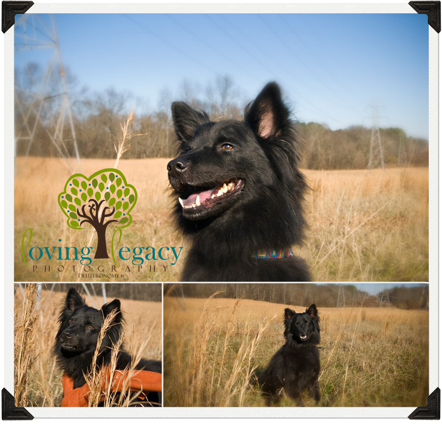 charlotte nc clearwater florida pet photography loving legacy angela sackett