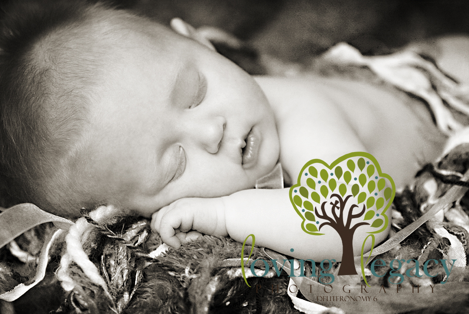 clearwater newborn portraits loving legacy photography studio